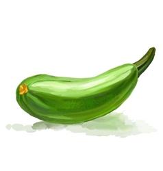 Zucchini hand drawn painted vector