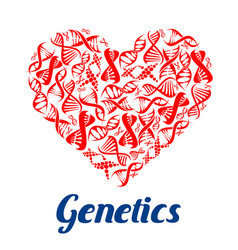 red heart with dna symbols vector image