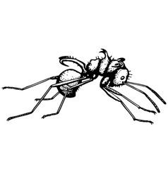Ant polyrrhachis vector