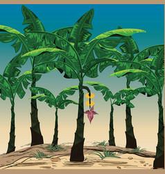 beautiful banana plantations in bright sky vector image