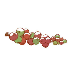 coffee fruit icon natural berries on a branch vector image