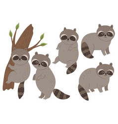 set cute raccoons isolated on a white vector image