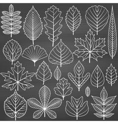 Set of tree leaves on chalkboard background vector