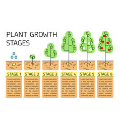 Tree growth stages infographics vector