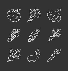 vegetables chalk icons set vector image