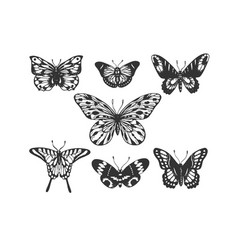 butterfly insect animal engraving vector image