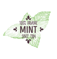 mint or peppermint organic herbs market isolated vector image