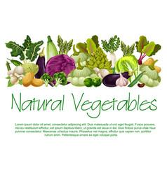 natural vegetables organic food poster vector image