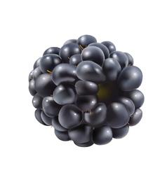 Blackberry vector image vector image