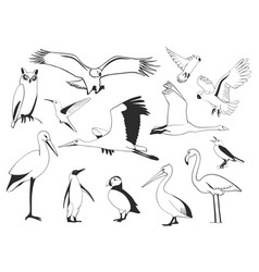 hand drawn bird set vector image