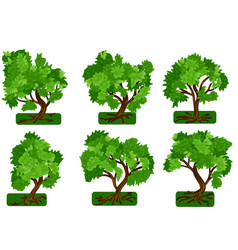 Set trees vector