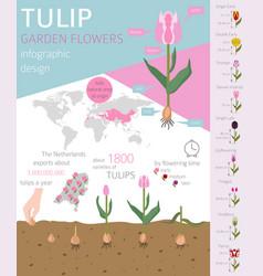 Tulip varieties flat icon set garden flower and vector