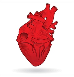 heart realistic vector image vector image