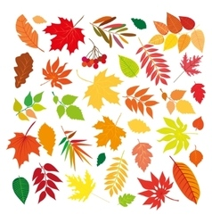 Big set of beautiful colorful autumn leaves vector image vector image