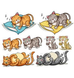 Cat in different actions vector