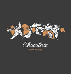 cocoa branch chocolate tropical harvest sweet food vector image
