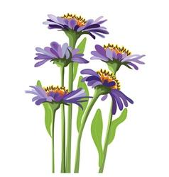 floral design purple aster vector image