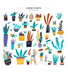house plants color hand drawn set vector image