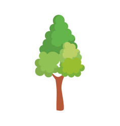 pine tree plant isolated icon vector image