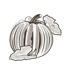 Pumpkin in vintage style Line art vector image