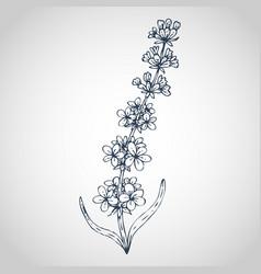 Lavender hand drawn vector