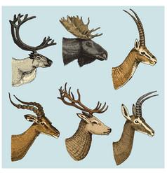 set of horn antlers animals moose or elk with vector image