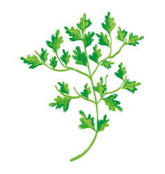 Green nice plant decoration botany vector