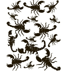 Set Scorpions Silhouette vector image