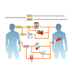 Viral hepatitis infection vector