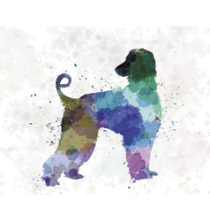Afgan hound 01 in watercolor vector