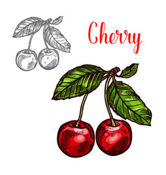 Cherry sketch fruit berry icon vector