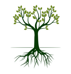 green spring tree outline vector image