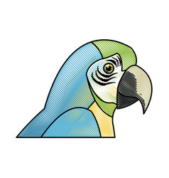 Macaw amazon bird brazil wildlife image vector