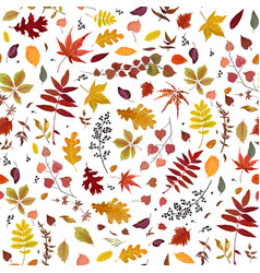 Seamless autumn pattern with leaves vector