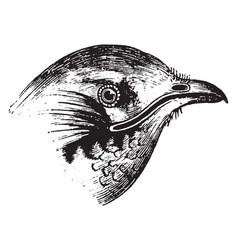Swift beak vintage vector