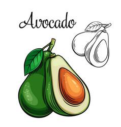 avocado drawing icon vector image