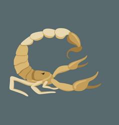 scorpio flat style profile vector image