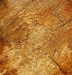 Wood texture tree rings sawing wood vector