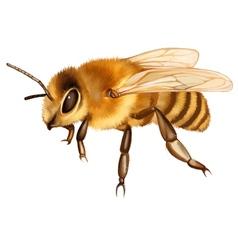 Sitting Bee vector image vector image