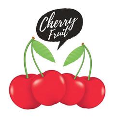 cherry realistic fruit vector image