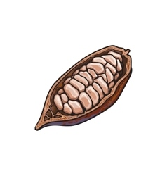 Half of ripe cacao fruit with cocoa beans inside vector