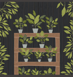 houseplants in shelf wooden decoration vector image
