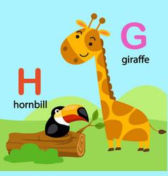 Isolated alphabet letter g-giraffe h-hornbill vector