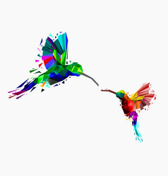 isolated low poly colorful couple hummingbird vector image