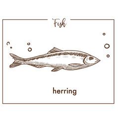 herring sketch fish icon vector image vector image