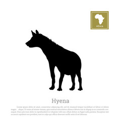 black hyena silhouette on a white background vector image vector image