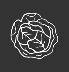cabbage chalk icon vector image