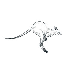 Kangaroo sketch vector