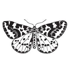 Moth vintage vector