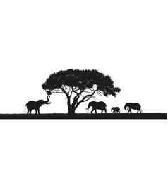 black silhouette elephants in savannah vector image